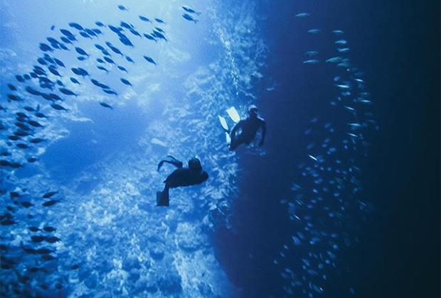Дайвинг в открытом океане