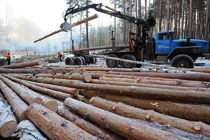 Россия ужесточила правила экспорта древесины