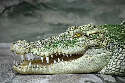 Крокодил растерзал купавшегося школьника