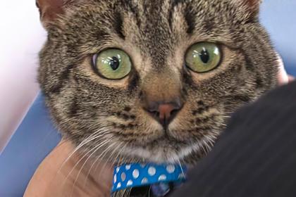 Полицейские поблагодарили кошку за спасение мужчины