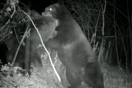 На границе подрались медведи из России и Китая