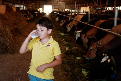 Раскрыта опасность парного молока
