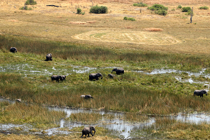 Сотни слонов погибли в Африке при загадочных обстоятельствах