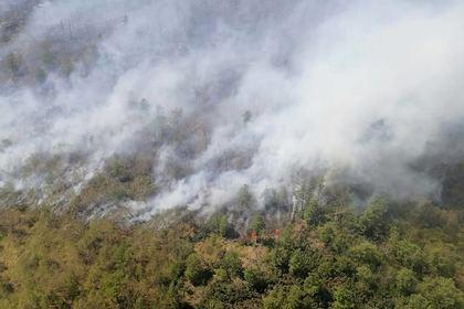 В российском регионе ввели режим ЧС из-за лесных пожаров