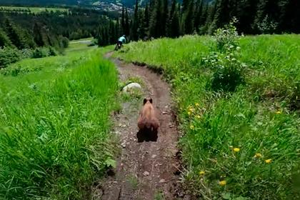 Встреча велосипедистов с медведем в горах попала на видео