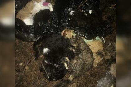 В России нашли мешки с десятками трупов искалеченных животных