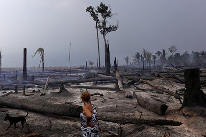Рекордные лесные пожары произошли вАмазонии