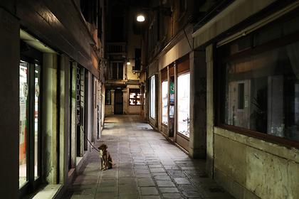 Преданный пес погиб сразу после смерти хозяйки