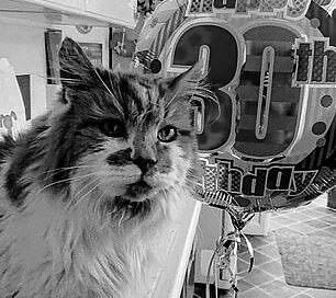 Умер самый старый в мире кот