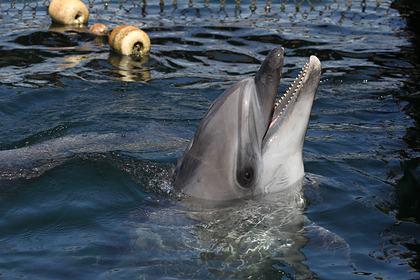 Дельфина спасли от гибели на берегу российского курорта