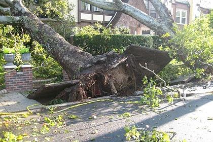 Буря повалила дерево на компанию во время детского праздника