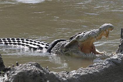Крокодил съел семь человек за семь лет и попался