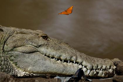 Крокодил напал на браконьера и утащил в воду