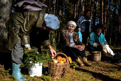 Россиянам дали советы по сбору грибов
