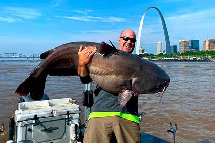 Рыболовы вдвоем вытащили из реки огромного сома