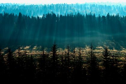 Еврейская автономная область получит 32,4 миллиона рублей на сохранение лесов