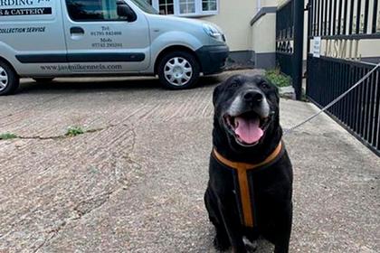 Хозяин бросил престарелого пса на улице и написал бездушную записку