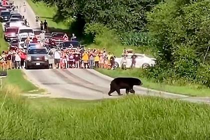 Известный медведь-путешественник преодолел больше 640 километров в поисках самки