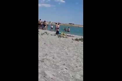Туристы забили тюленя ради эффектных снимков и попали на видео