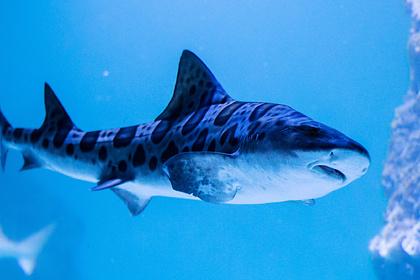 Мужчина лишился ноги после нападения акулы и смеялся по пути в больницу