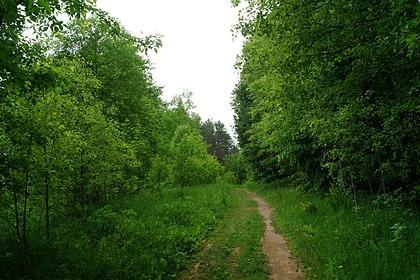 В российском регионе обнаружили примотанный скотчем к дереву труп мужчины
