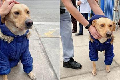 Преданная собака много дней ждала хозяина у входа в больницу
