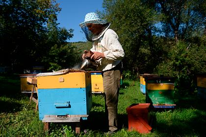 В России начали массово гибнуть пчелы