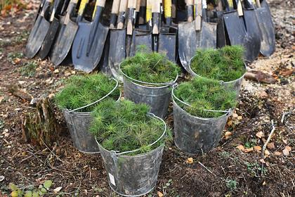 В Пермском крае высадили более четырех тысяч гектаров леса