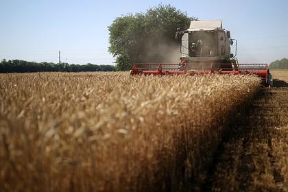 Поставки зерна из России превысят 43 миллиона тонн за 2019-2020 годы