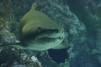 Подросток-серфингист погиб после нападения акулы