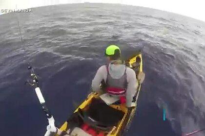 Любопытная акула проплыла под каяком рыбака и попала на видео