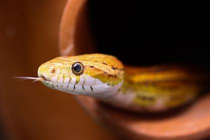 Ядовитая змея укусила трех членов одной семьи за четыре дня