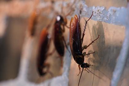 Москвичи обвинили компанию в подбрасывании им тараканов