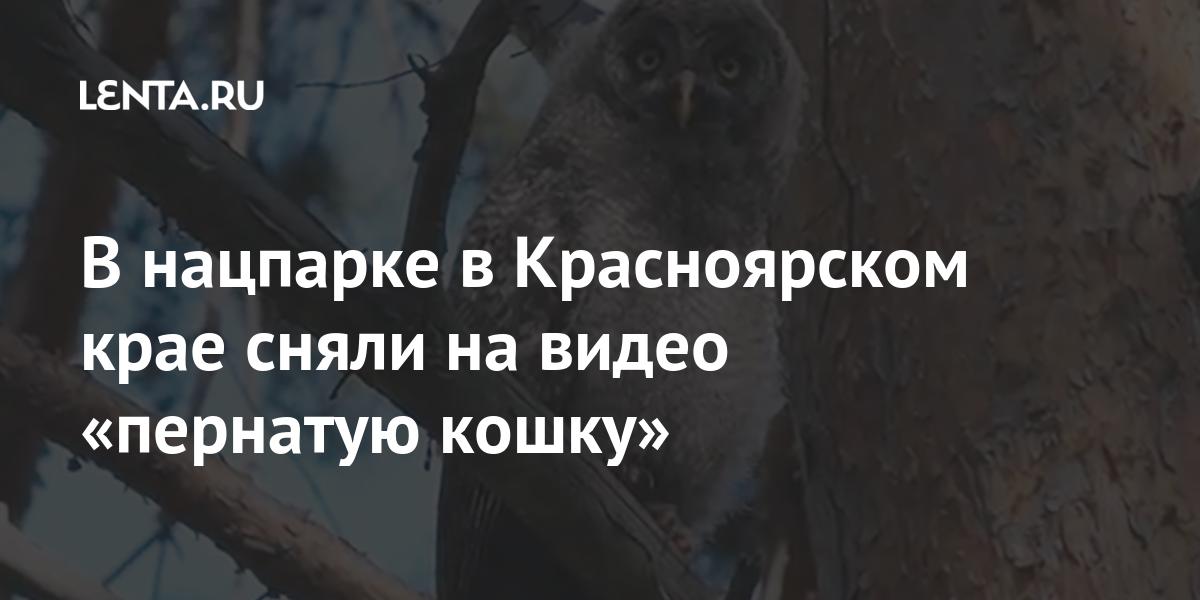 В нацпарке в Красноярском крае сняли на видео «пернатую кошку»