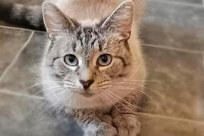 Кот вернулся домой с угрожающей запиской