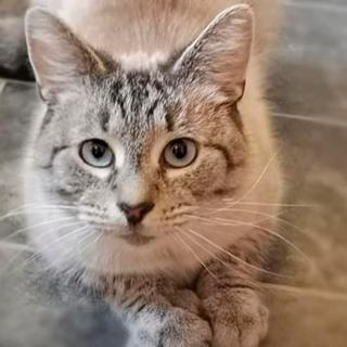 Кот вернулся домой с угрожающей запиской: Звери: Из жизни: Lenta.ru