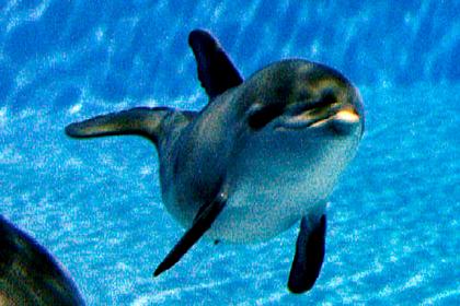 Россияне случайно убили новорожденного дельфиненка в Черном море