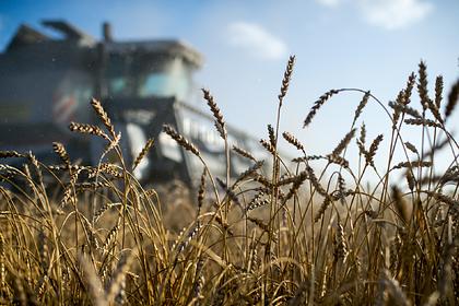 Российские аграрии решили направить на экспорт товары на 200 миллионов долларов