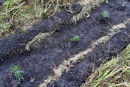 Власти Ставрополья отчитались о высадке 54 гектаров леса