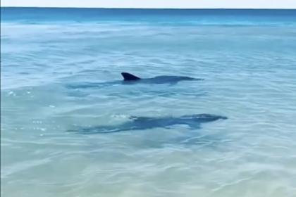 Подплывшие к берегу Сочи дельфины напугали туристок и попали на видео