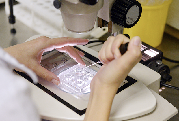 Оплодотворение яйцеклеток в лаборатории