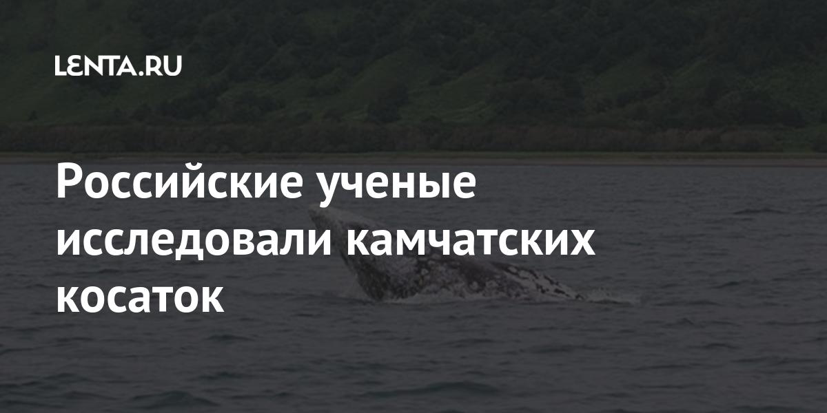 Российские ученые исследовали камчатских косаток