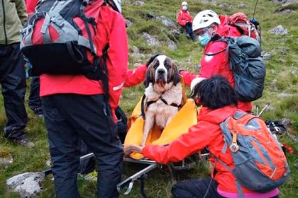 16 спасателей пять часов спускали сенбернара с самой высокой горы Англии