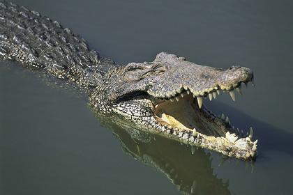 60-летний мужчина отбился от крокодила мачете