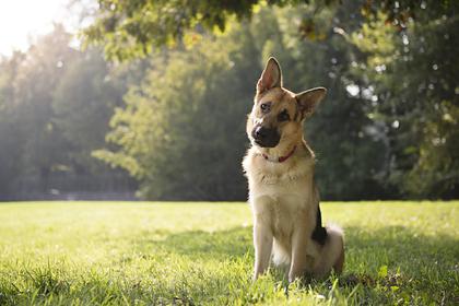 Первая заразившаяся коронавирусом в США собака умерла
