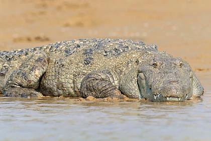 Серийный убийца скормил крокодилам около 50 человек