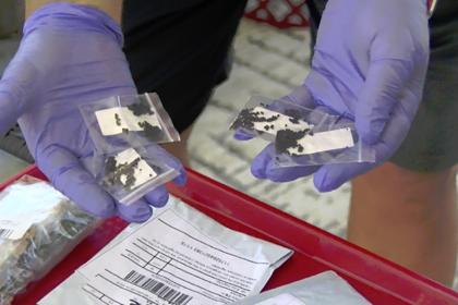 Объяснена тайна сотен посылок из Китая с семенами
