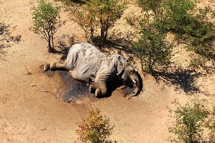 Раскрыта причина массового вымирания животных