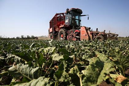 Российский регион в 16 раз увеличил объем экспорта сахара