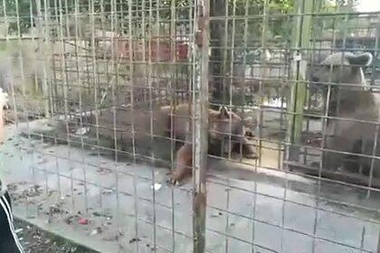 Появилось видео с загрызшими 11-летнего российского мальчика медведями
